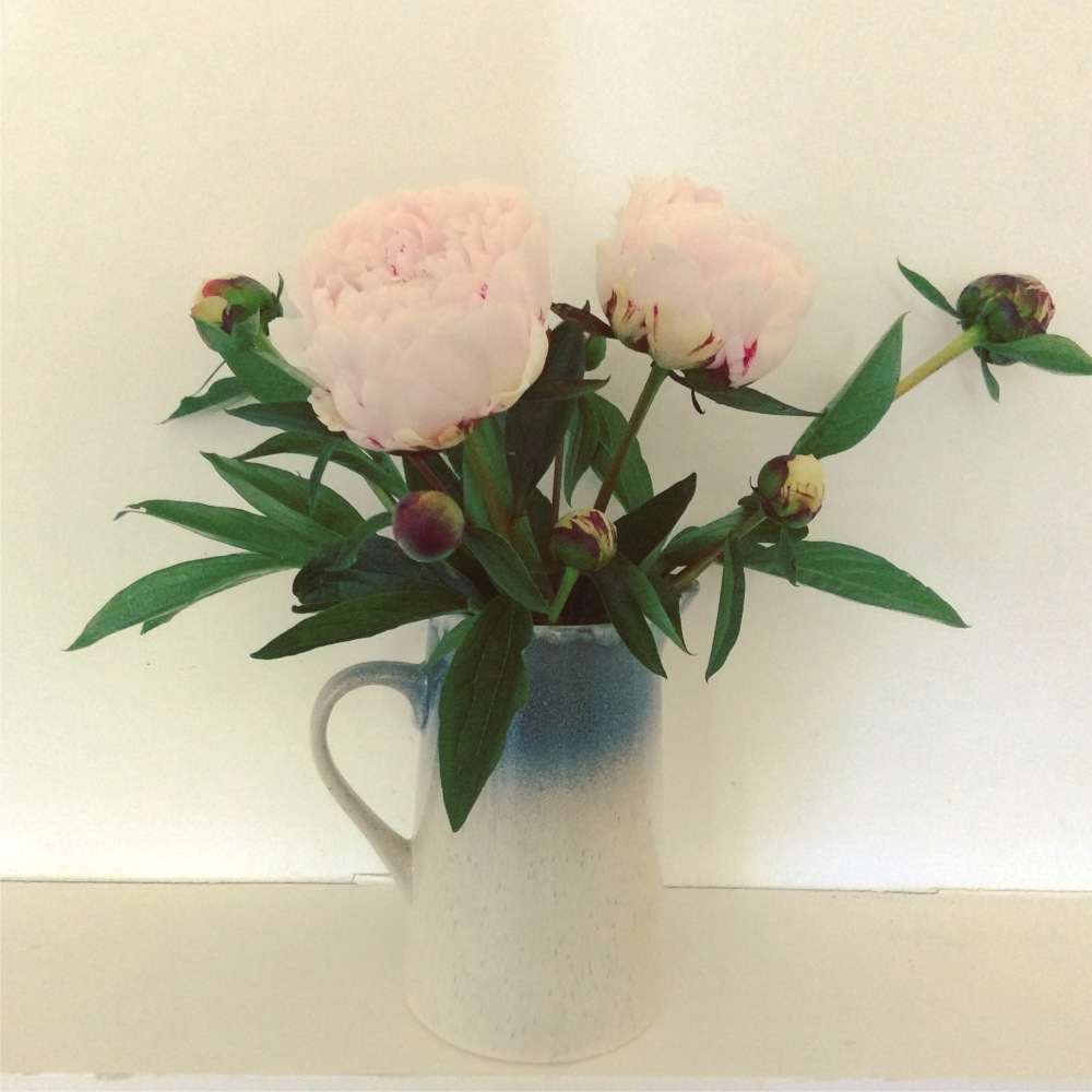Two pink peonies in jug